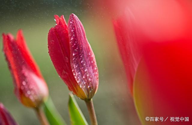 """描写""""春雨""""的好词好句好段,每一句都那么美,为孩子写作收藏"""