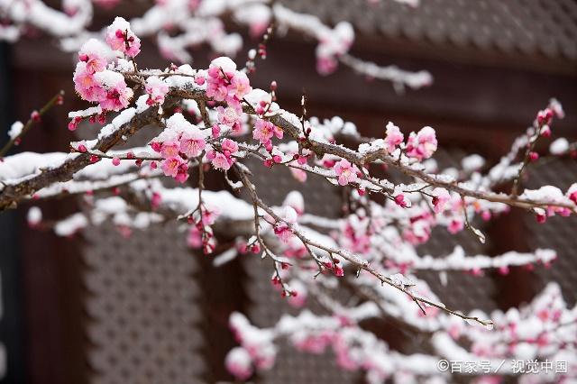 唐诗名家写冰雪的唯美诗句,美得令人窒息的古诗词