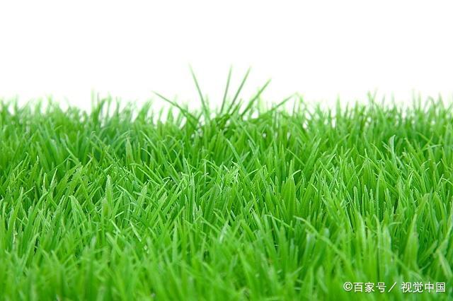 """春天来了,草儿绿了,描写""""小草""""的好词好句好段,收藏起来"""